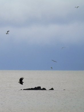 Rare Sea Eagle Sighting