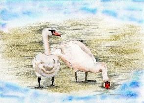 2 Swans shrunk